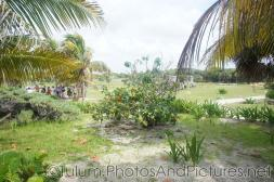 Various plants and trees at Tulum Ruins.jpg
