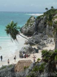 Beach and crooked palm tree of Tulum Ruins.jpg