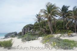 Coconut trees at Tulum Ruins small beach.jpg